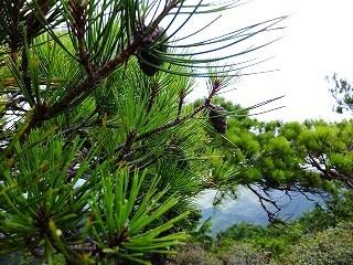 Baum 香り三昧 -9
