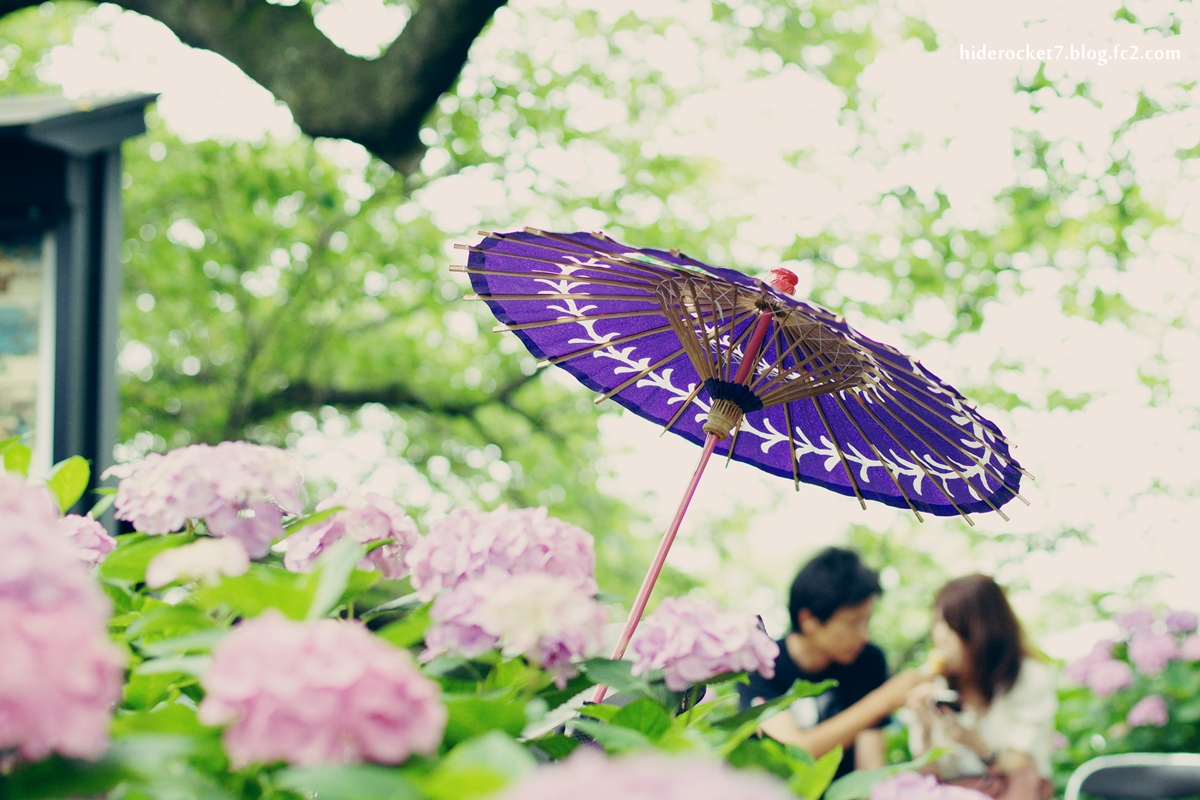 ajisai_2015_55mm_01.jpg