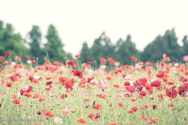 poppy-2015-10.jpg