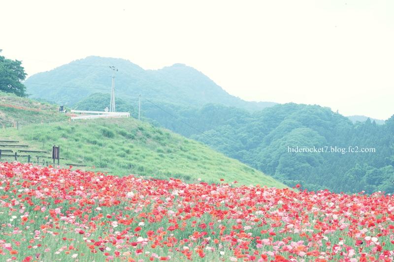 poppy-2015-12.jpg