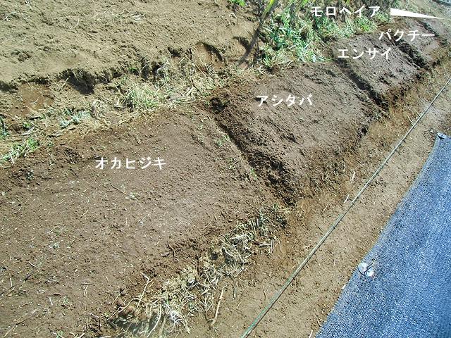 南方野菜の畝