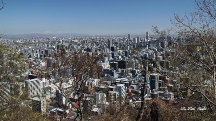 4/29円山
