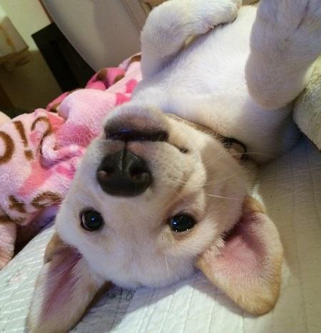 ムチムチ子犬テンテン