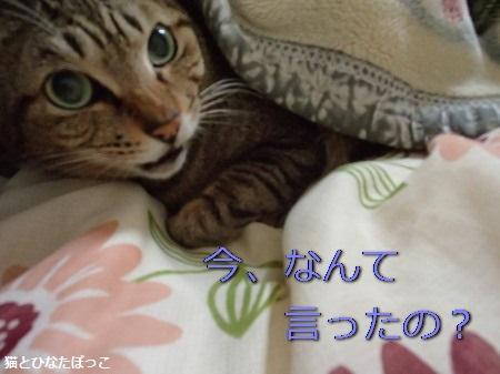 20150305_2.jpg