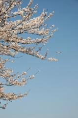Hyakuri AB_F-4EJ_381