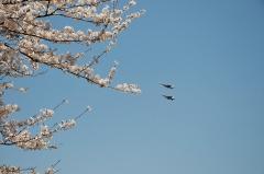 Hyakuri AB_F-15J_378