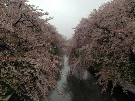 150405gojyougawa (1)