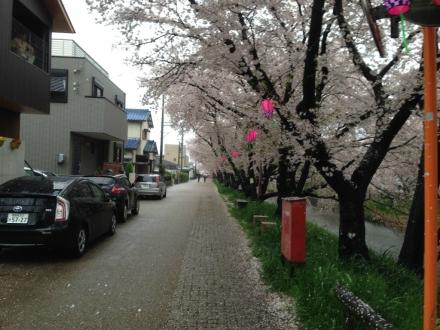 150405gojyougawa (3)
