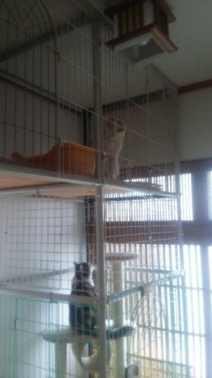 ペットの家を改築しました。