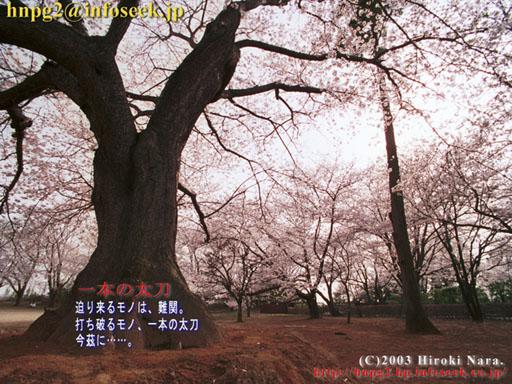 Cherry2003P01
