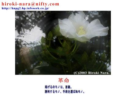 FLOWERS0306F