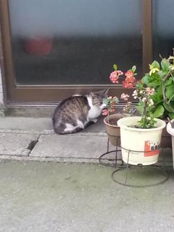 猫①_convert_20150413173422