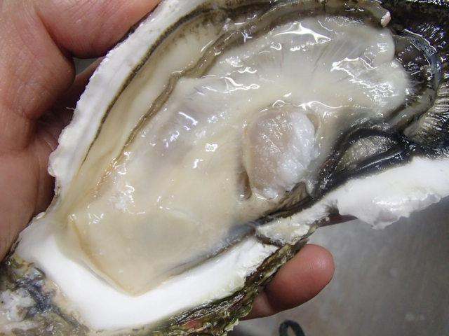 大牡蠣 (4)