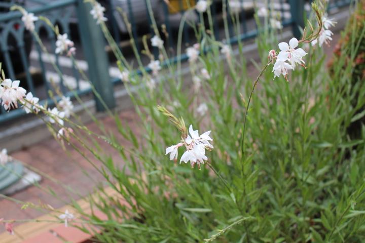 道沿いの花壇のお花。