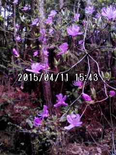150411_1543~001