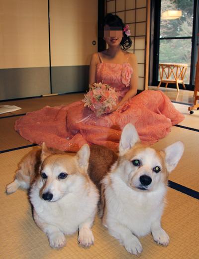 花嫁とハニッチ