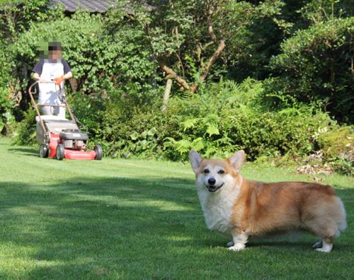 娘の芝刈り