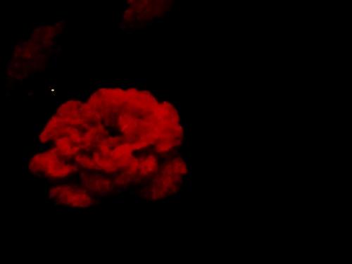 夜のミニバラ