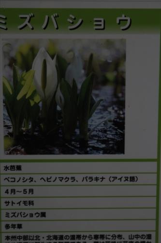 IMG_4507_R.jpg