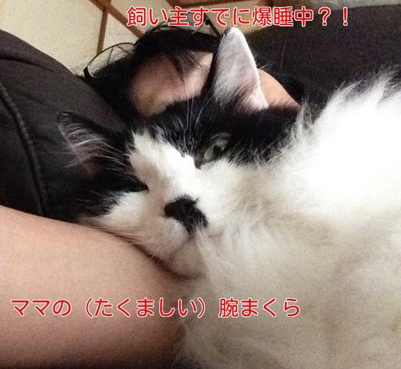 XY51mFfK5Z1o8Uc1435660759_1435660927.jpg
