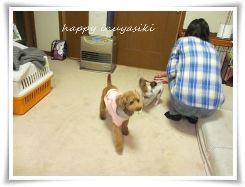 mini2IMG_0017-20141229.jpg