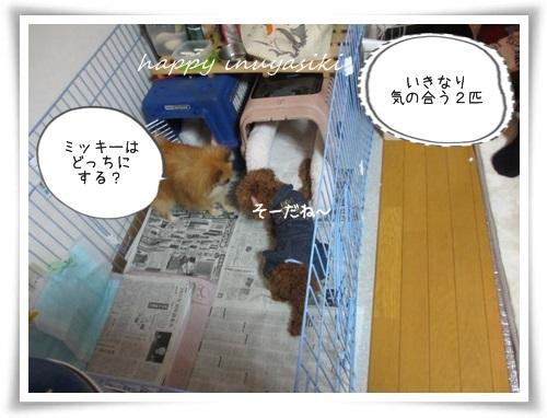 mini2IMG_0038-20141221.jpg