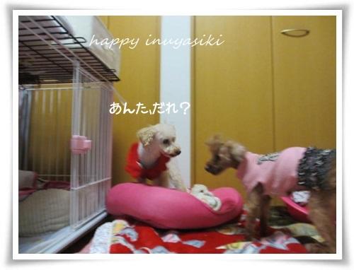 mini2IMG_0048-20141217.jpg