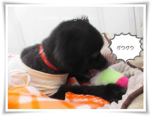 mini2IMG_0063-20150320.jpg