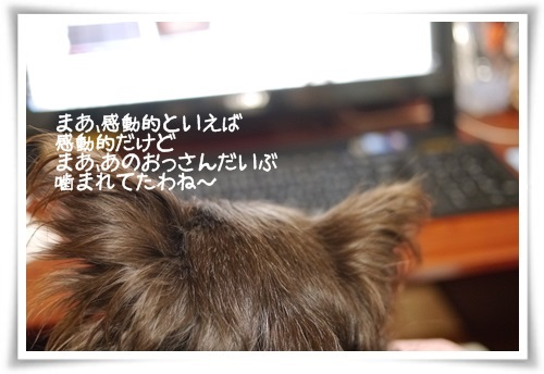 mini2P1400280-20141218.jpg