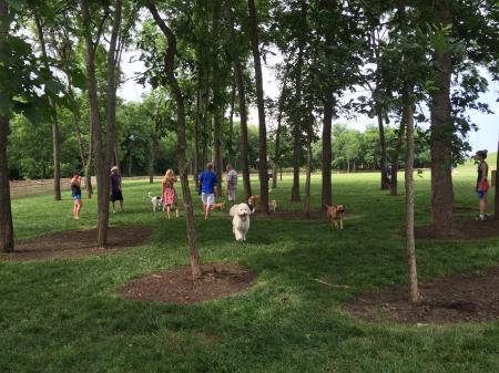 Dog Park1