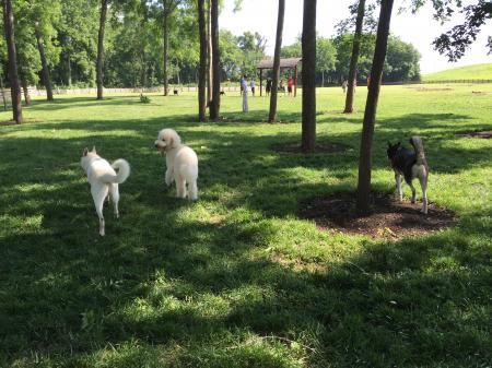 Dog Park5