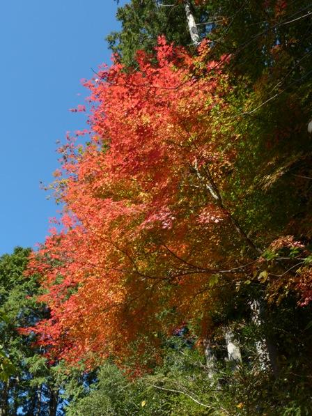 遅越の滝 紅葉 1