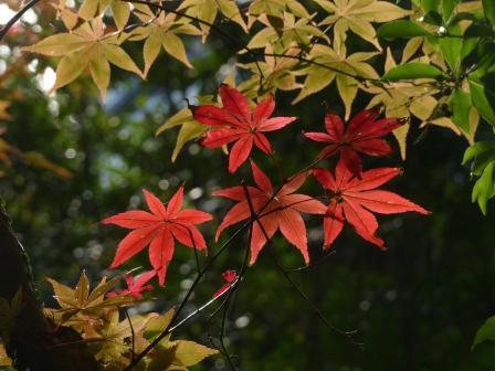 惣河内神社 紅葉 2
