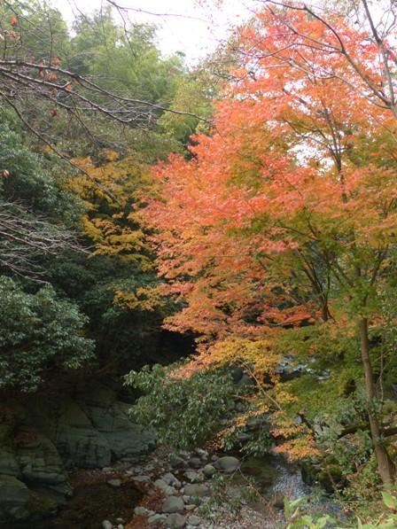 滑川渓谷へ行く途中 紅葉 1
