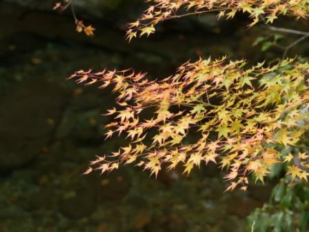 滑川渓谷へ行く途中 紅葉 2