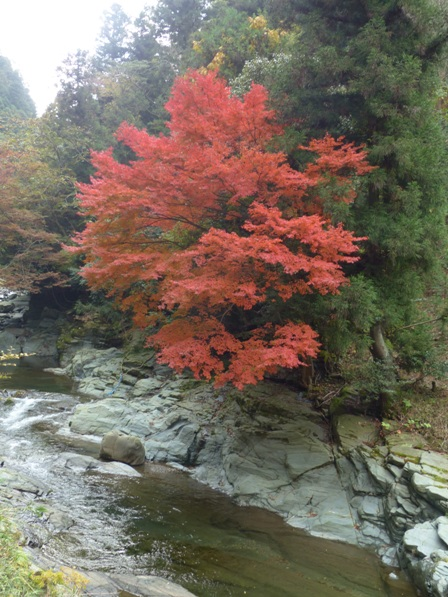 滑川渓谷へ行く途中 紅葉 3