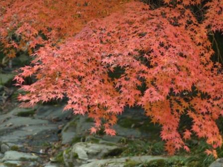 滑川渓谷へ行く途中 紅葉 4