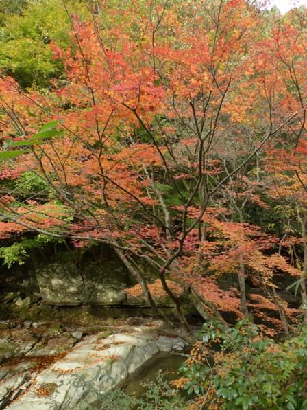 滑川渓谷へ行く途中 紅葉 7