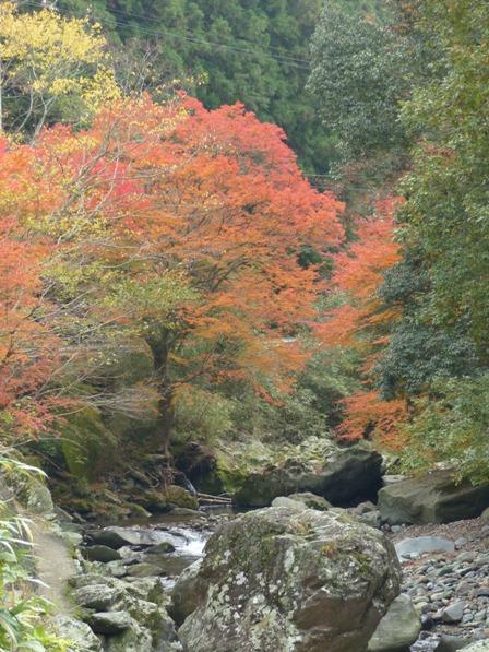 滑川渓谷へ行く途中 紅葉 8