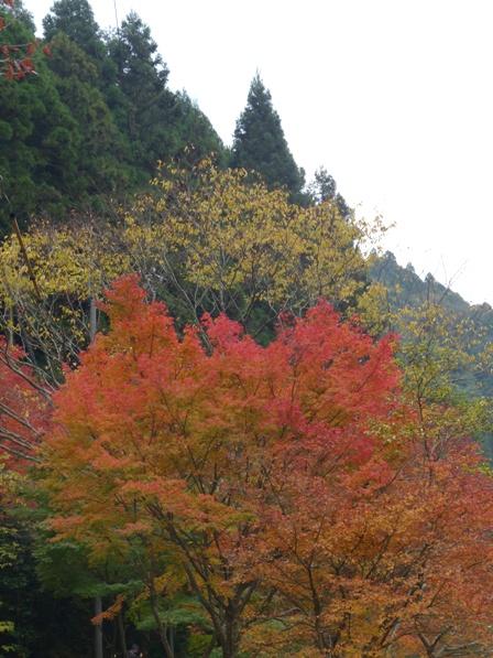 滑川渓谷へ行く途中 紅葉 9