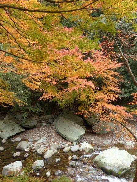 滑川渓谷へ行く途中 紅葉 10