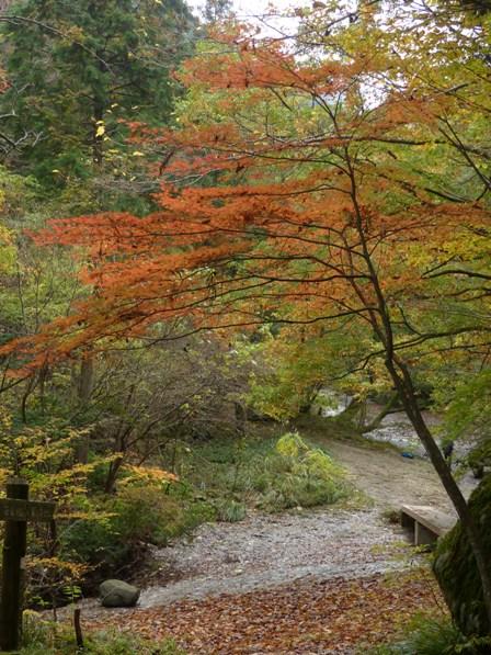 滑川渓谷 紅葉 2