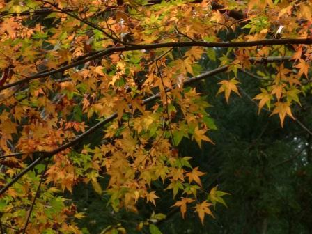 滑川渓谷 紅葉 7
