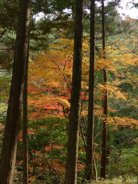 滑川渓谷 紅葉 8