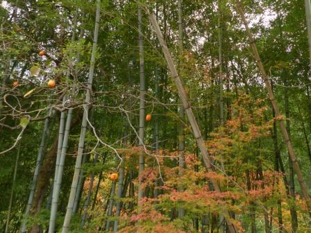 滑川渓谷 紅葉 11