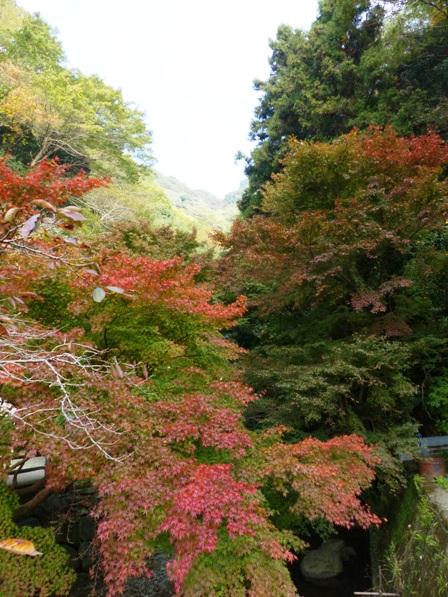 白滝公園 紅葉 1