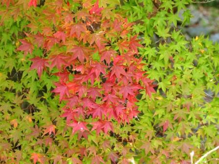 白滝公園 紅葉 2