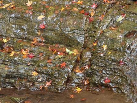 白滝公園 紅葉 10