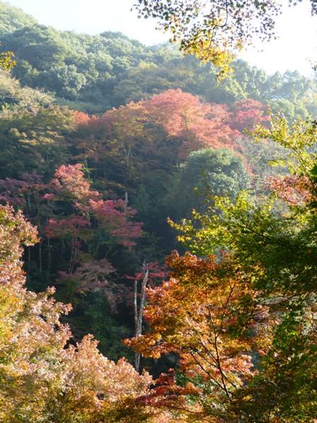 白滝公園 紅葉 3
