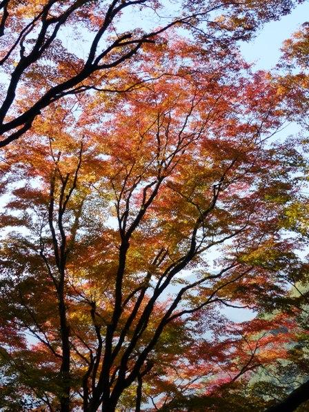 白滝公園 紅葉 5